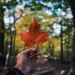 Is Moving to Canada Really Worth It?